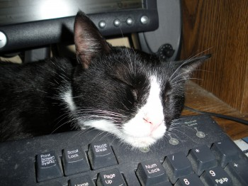 My Cat Using the Keyboard as a Pillow